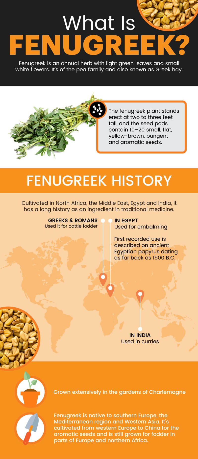 8 Fenugreek Benefits, Including for the Gut, Lungs & More